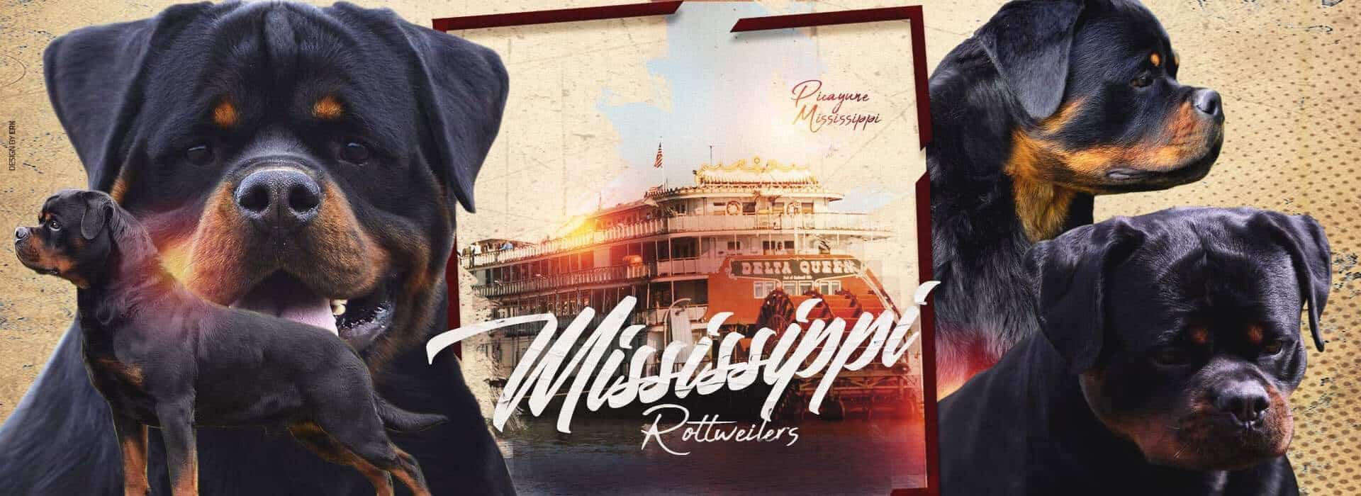 Mississippi Rottweilers Banner