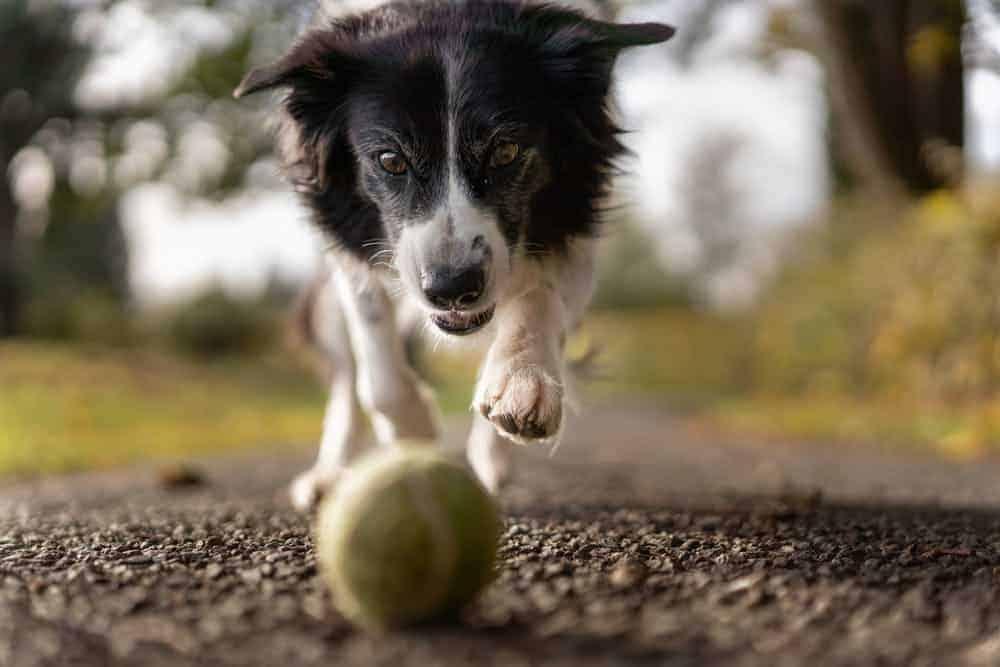 puppy chew toy