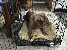 nice dog in crate with chew toy