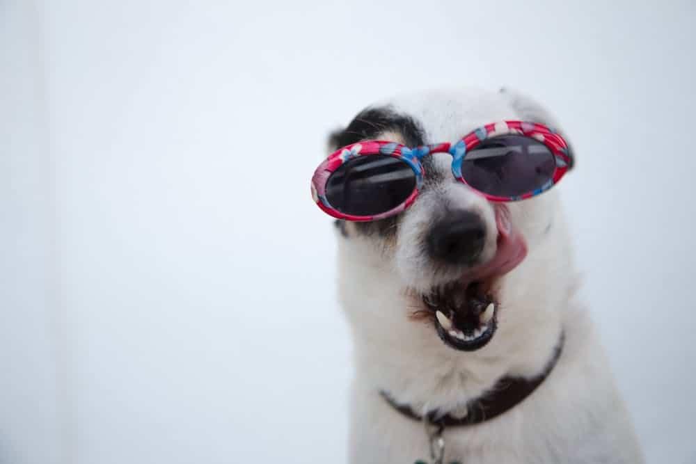 dog uses eyes to communicate