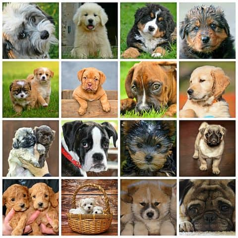 guard dog breeds for new owners