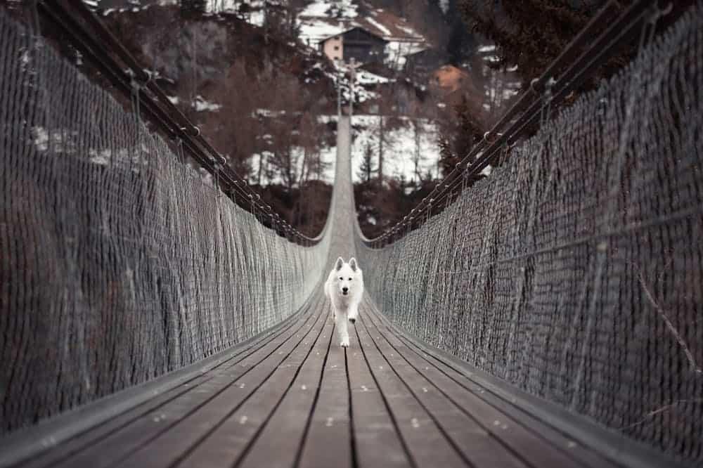 narrow dog