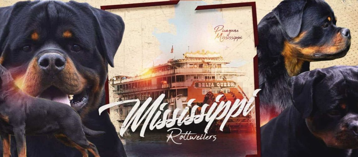 Mississippi Rottweilers Banner