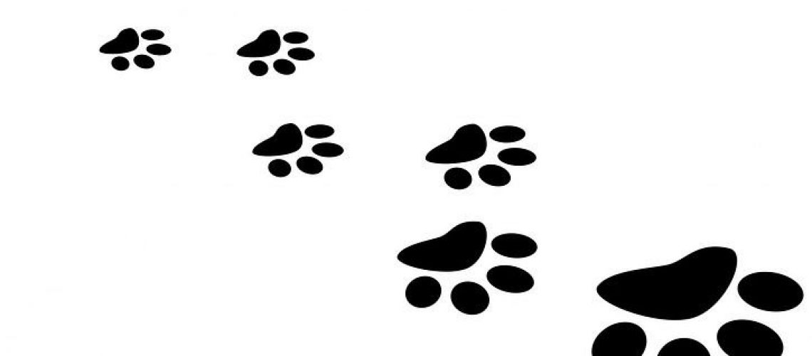 paw-of-puppy
