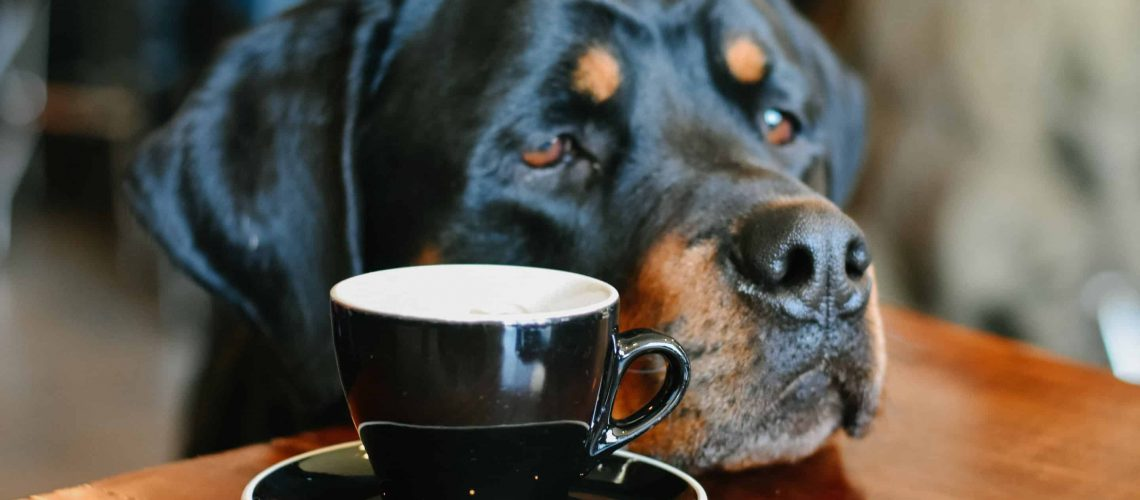 Big Rottweiler living inside apartment